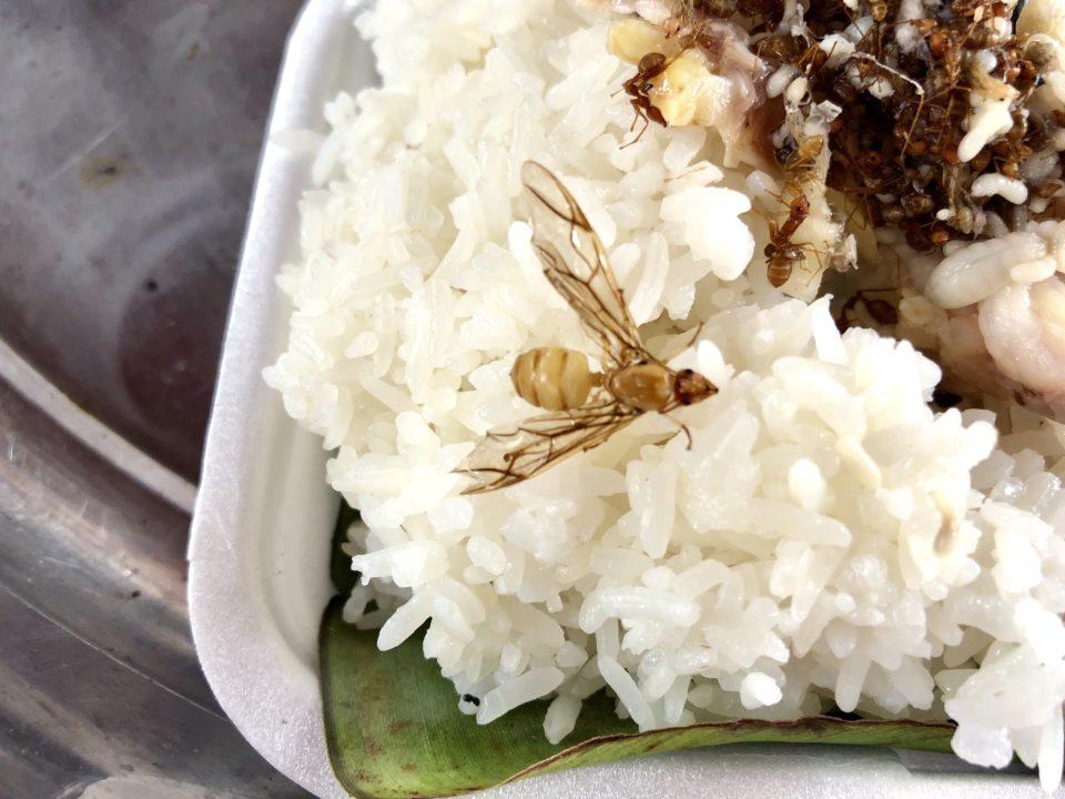 カンボジアで食べたアリ飯と蜂