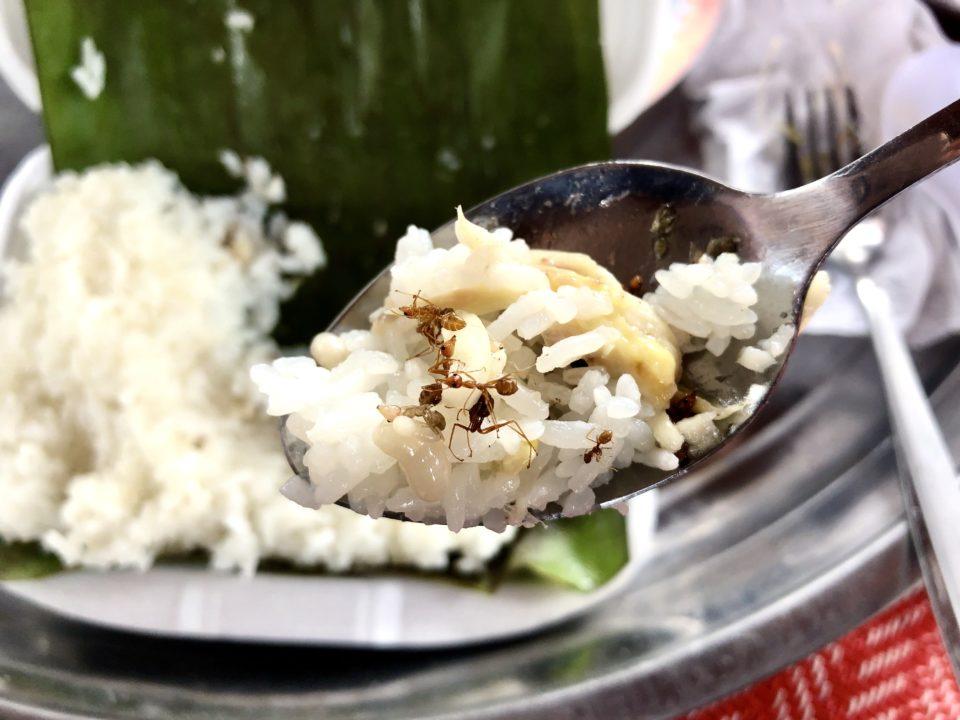 カンボジアで食べたアリ飯