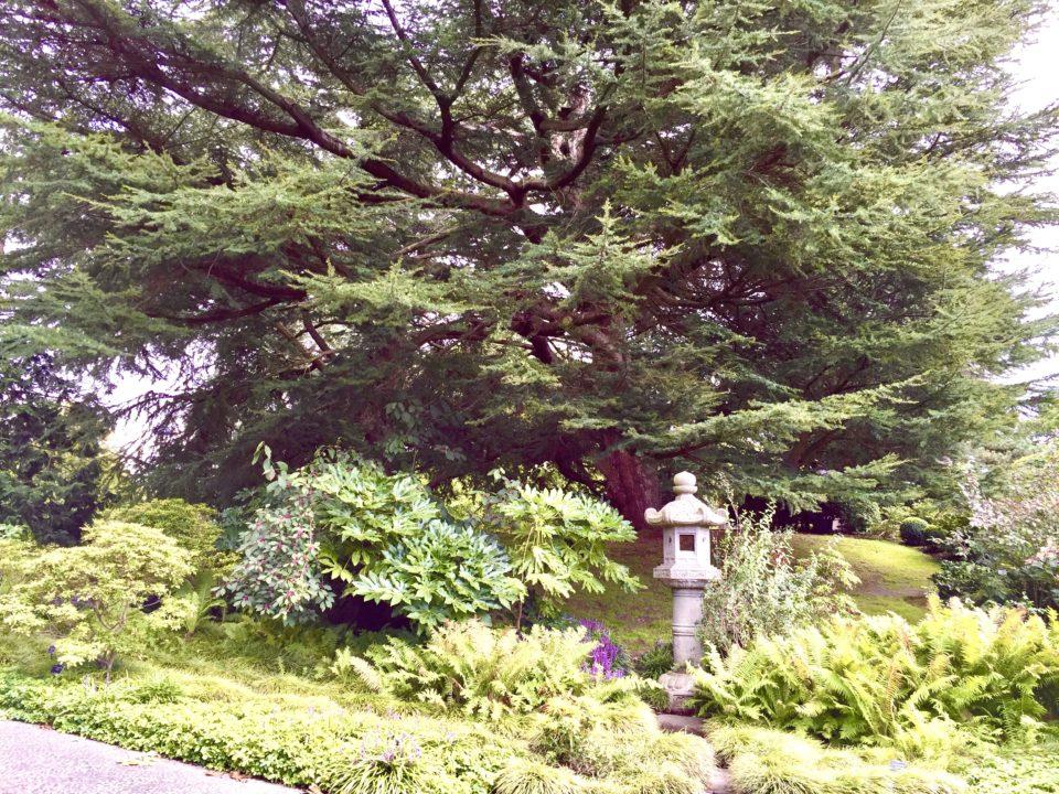 キューガーデン 日本庭園